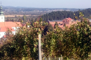 Poljoprivredom do resocijalizacije: Vrhunska vina, svinje, ovce, med iz Kaznionice u Lepoglavi