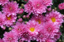 Ukrasno bilje - uzročnici bolesti i zaštita