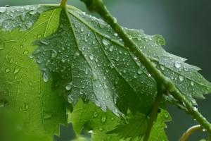 Kiša se vraća u naše krajeve