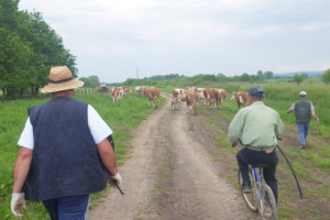 Ivan Klasnić: Nelogičnost u novom Zakonu o raspolaganju državnim poljoprivrednim zemljištem