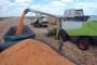 Kodeks otkupa žitarica stvorio probleme!