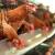 Domaći živinari moraju da se prilagođavaju EU propisima