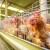 Raste proizvodnja konzumnih jaja - u izgledu je 8 miliona komada?!