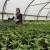 Letnja praksa za učenike poljoprivrednih škola, uprkos svim promenama