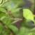 Dosadni komarci: Kako se zaštititi i smanjiti im broj?