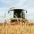 AMIS: Globalna proizvodnja pšenice bit će nešto manja od prošlogodišnje