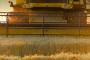 1,10 kn za kg pšenice - još jedna propala sezona?