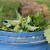 Koprivino đubrivo odlično djeluje na biljke, a od nje se pravi i insekticid