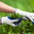 Koprivom, paprikom i duvanom u borbu protiv štetočina