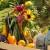 Sve prednosti spoja organskog uzgoja, biodinamike i permakulture u bašti
