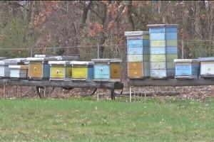 Zabrana kretanja: Stanje još uvek nije kritično, ali pčelari nestrpljivi