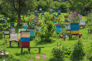 Sunce ili senka - šta je bolje za pčele?
