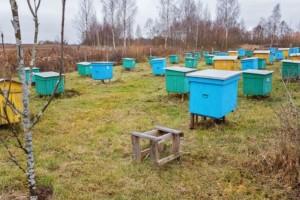 Od marta kreće besplatna obuka za pčelare