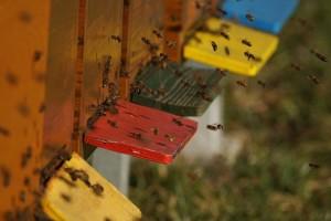 Od 6 do 9 KM po košnici - podsticaj za pčelare