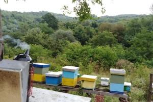 Napravili brend od proizvodnje meda sa organskom aronijom