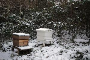 Utopljavanje pčela - da ili ne?