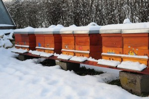 Kako pčele griju košnicu?