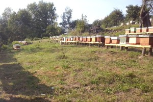 Pčelarenje na 1.000 m nadmorske visine
