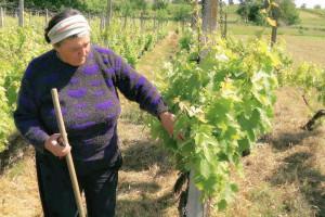 Albina Kovačić: Vinograd zahtijeva slugu, a s borovnicama smo pogodili