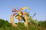 Kako se boriti protiv kovrčavosti lista breskve?