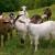 2. Radionica za uzgajivače autohtonih pasmina