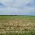 HSEP: Loš inspekcijski nadzor i manjak sjemena koče ekološku proizvodnju