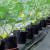 Uzgoj krastavaca na mreži