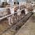 Pivski trop u hranidbi krava i njegov utjecaj na proizvodnju mlijeka
