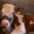 Preventivom protiv masne jetre kod mlečnih krava