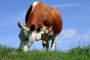 Hranidba stoke u jesensko-zimskom razdoblju