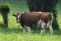 Upis u Registar otkupljivača mlijeka