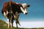 Alternativni izvori energije - veliki potencijal poljoprivreda i farme