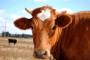 """Promocija priručnika """"Preporuke u hranidbi mliječnih krava"""""""