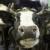 Skandal na mliječnoj farmi - mršave krave leže u mokraći i fekalijama