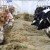 Pandemija nije ugrozila proizvodnju mlijeka - zabilježeni i pozitivni trendovi