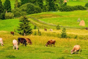 Predstavljena strategija privrednog oporavka EU: 15 milijardi eura za poljoprivredu