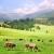Preduslov organskih proizvoda u stočarstvu - ispaša