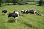 Mljekarstvo ima perspektivu - tvrdi poljoprivrednik iz Babine Grede