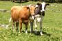 Mljekari prijete prosvjedom i prestankom isporuke mlijeka