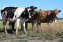 Isplata potpora za proizvedeno mlijeko