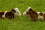 Osječko-baranjska županija tražit će besplatnu legalizaciju farmi