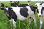 "Seminar  na temu ""Proteini u hranidbi krava"""