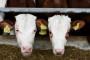 Visoki troškovi legalizacije farmi