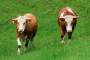 Borba velikih i malih za poljoprivredno zemljište