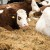 Šta broj 13 znači za BiH poljoprivredu?!
