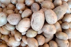 Naši problemi sa prodajom krompira i ukrajinski primer