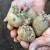 Pre sadnje krompira obavite mere zaštite od bolesti i štetočina