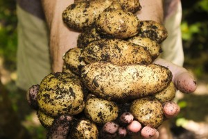 Domišljati farmer: Ljut na trgovačke centre postavio automat za prodaju krumpira 24/7