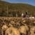 Dok proizvođači u susjedstvu zaoravaju krumpir, u Francuskoj i Njemačkoj raste proizvodnja