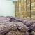 Obezbjeđeno sjemenskog krompira za 580 porodica, za proljetnu sjetvu